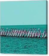 Seabird Lineup Canvas Print