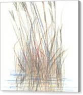 Seagrass 1 Canvas Print