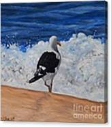 Seagull And Surf Canvas Print
