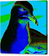 Seagull Art 2 Canvas Print