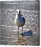Seagull At Low Tide Canvas Print