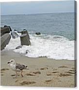 Seagull At The Sea Canvas Print