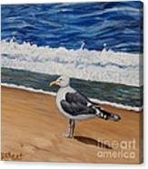 Seagull At The Seashore Canvas Print