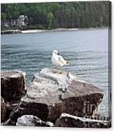 Seagull Awaits Canvas Print