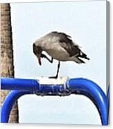 Seagull Balancing Act Canvas Print