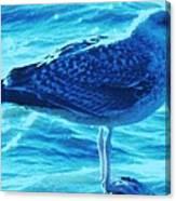 Seagull Basking In The Sun Canvas Print