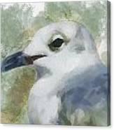 Seagull Closeup Canvas Print