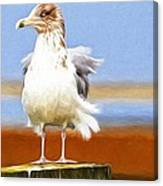 Seagull Colors Canvas Print