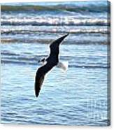 Seagull Flight Canvas Print