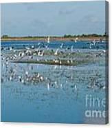 Seagull Flock Canvas Print