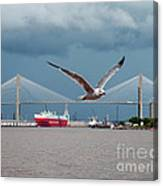 Seagull Foto Bombs Image Canvas Print