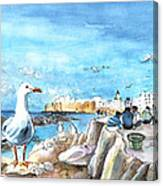 Seagull In Essaouira In Morocco Canvas Print
