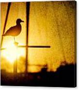 Seagull In Harbor Sunset Canvas Print