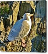 Seagull In Shadow Canvas Print