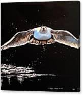 Seagull In The Moonlight Canvas Print