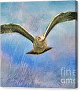 Seagull In The Storm Canvas Print