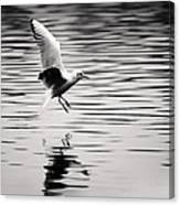 Seagull Landing On Lake Canvas Print