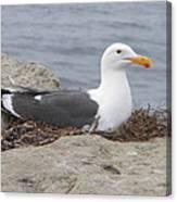 Seagull Nest Canvas Print