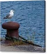 Seagull On A Bollard  Canvas Print