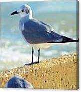 Seagull On Sea Wall Canvas Print
