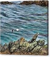 Seagull Over Rocks Canvas Print