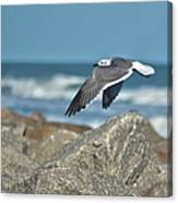 Seagull Parallel Canvas Print