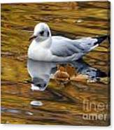 Seagull Resting Among Fall Leaves Canvas Print