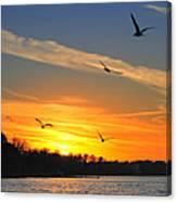Seagull Serenity Canvas Print