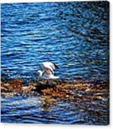 Seagull Wings Lifted Canvas Print