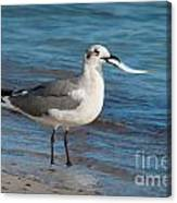 Seagull With Fish 1 Canvas Print
