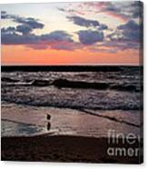 Seagull With Sunset Canvas Print