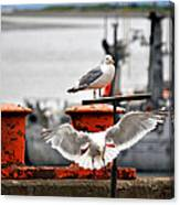 Seagulls Expression Canvas Print