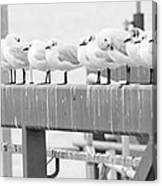 Seagulls In A Row Canvas Print