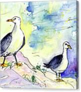 Seagulls In Calpe In Spain Canvas Print