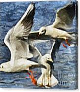 Seagulls In Flight - Drawing Canvas Print