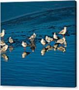 Seagulls On Frozen Lake Canvas Print