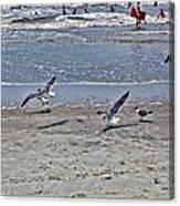 Seagulls On The Beach Canvas Print