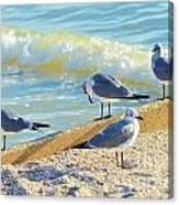 Seagulls On Wall Canvas Print