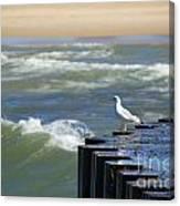 Seagull's Perch Canvas Print