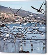 Seagulls Seagulls And More Seagulls Canvas Print