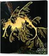 Seahorse Shuffle Canvas Print