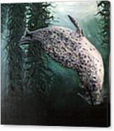 Seal In The Kelp Canvas Print