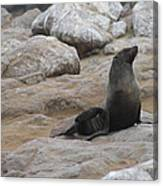 Seal In The Sun Canvas Print