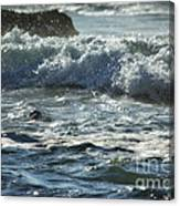 Seal Surfing Waves Canvas Print