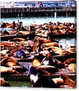 Seal Wharf Canvas Print