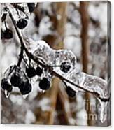 Sealed In Ice Canvas Print
