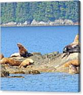 Seals In Alaska 1 Canvas Print
