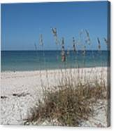 Seaoats And Beach Canvas Print