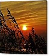 Seaoats And Sunrise Hatteras Island 1 7/31 Canvas Print