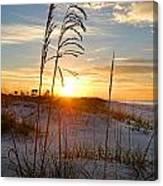 Seaoats Sunrise Canvas Print